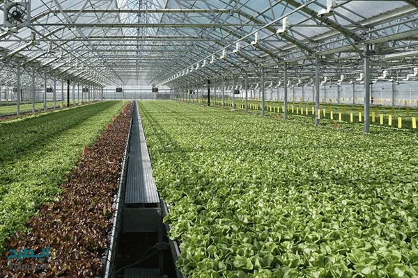 احداث 1200 هکتار گلخانه با حمایت بانک کشاورزی در 18 ماه اخیر
