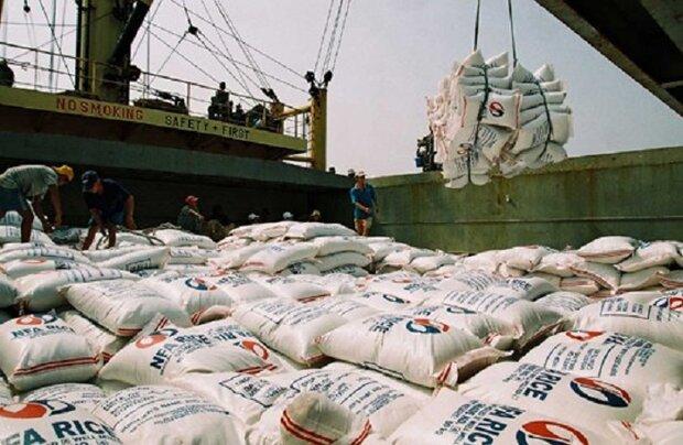 ممنوعیت واردات برنج برای حمایت از تولید داخل ضروری است