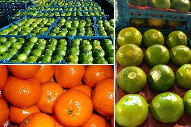 گرانفروشی میوه به سبک شرکت های بسته بندی